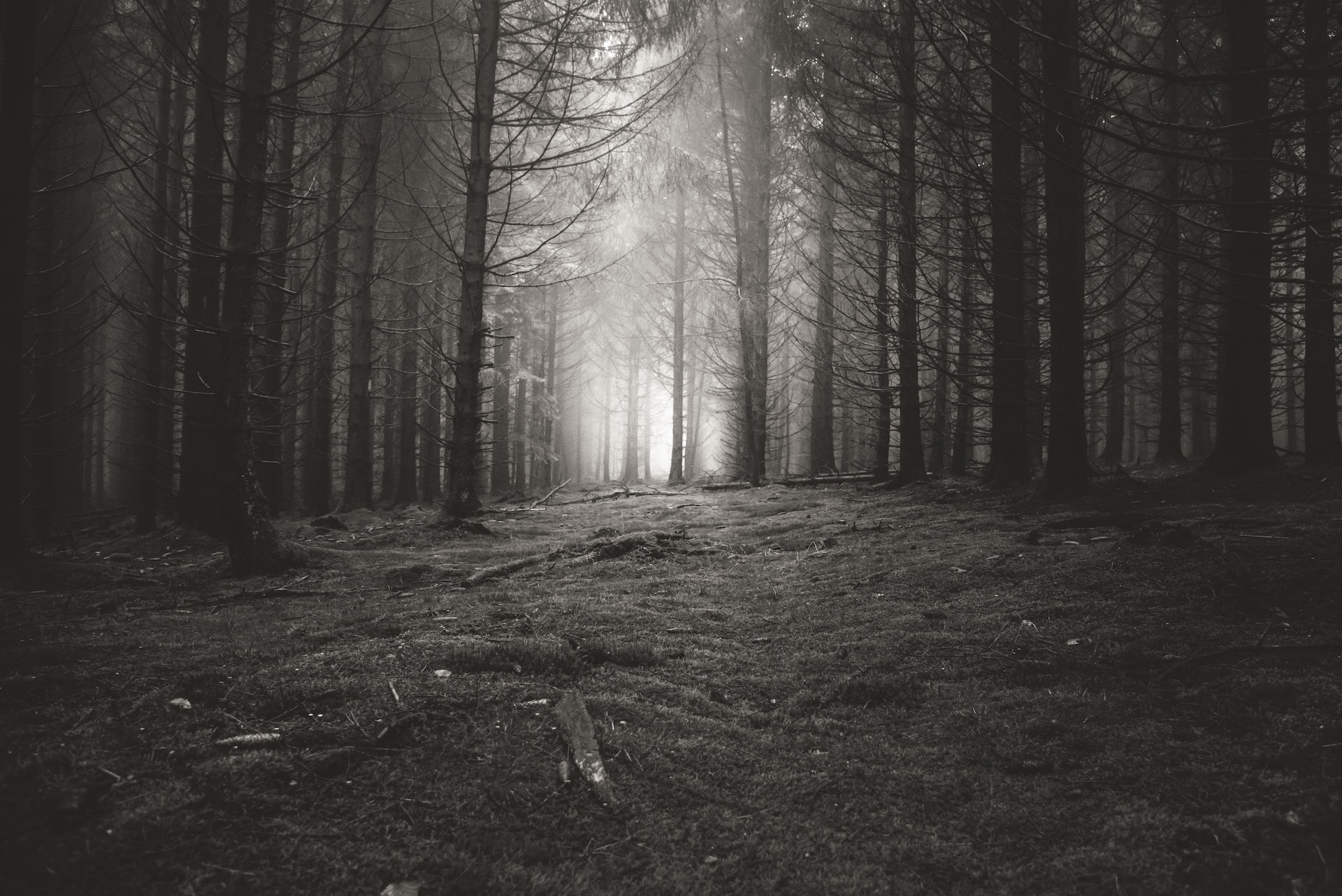 grayscale photo of forest trees