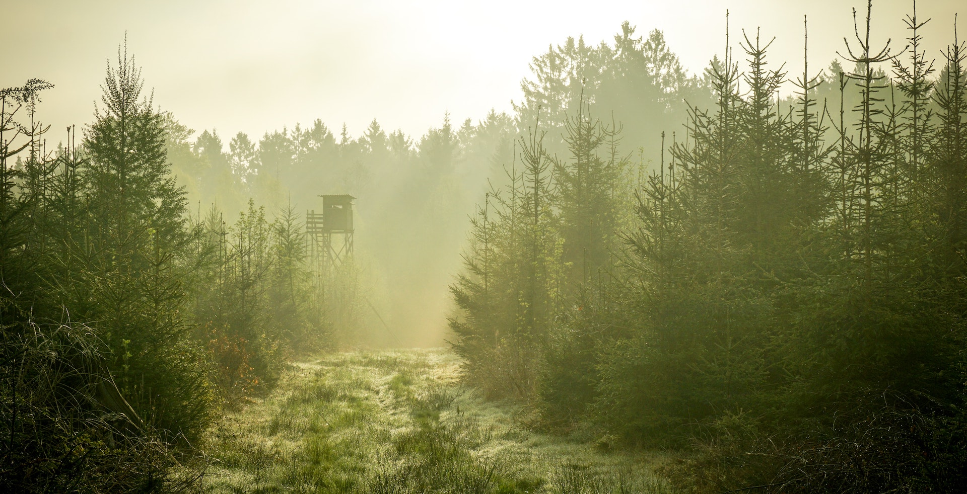 Misty Hunting Stand