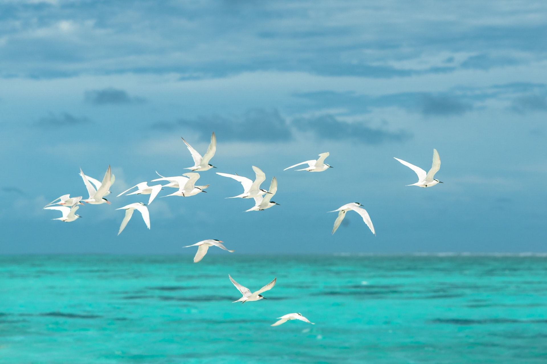 Flock of White Seagulls Flying over the Large Body of Water